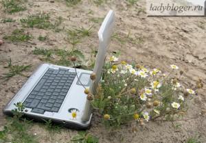 Ноутбук и ромашки