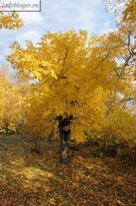 Осень в Старочеркасске